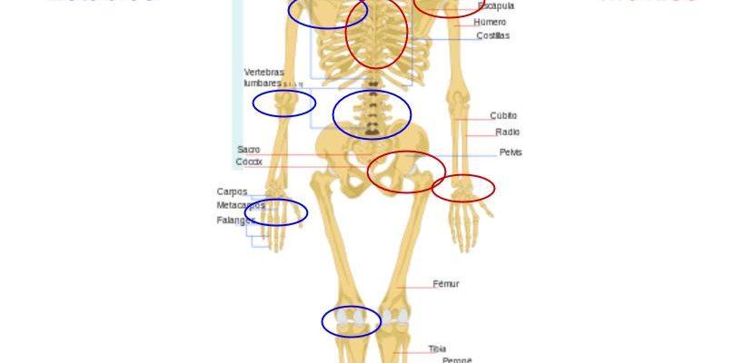 Esquema del esqueleto humano mostrando el Joint byt joint approach.