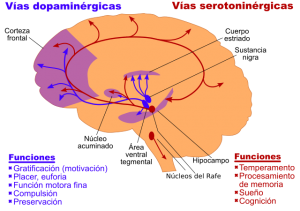 Vías del sistema nervioso central
